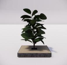 植物_001_室内设计模型